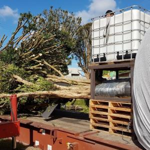 DC Logistics Handle Transport of 10 Jabuticaba Trees